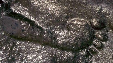 giant footprint 6